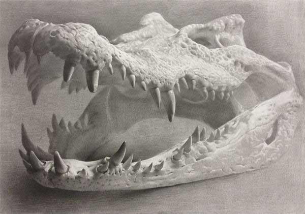Crocodile, 2013