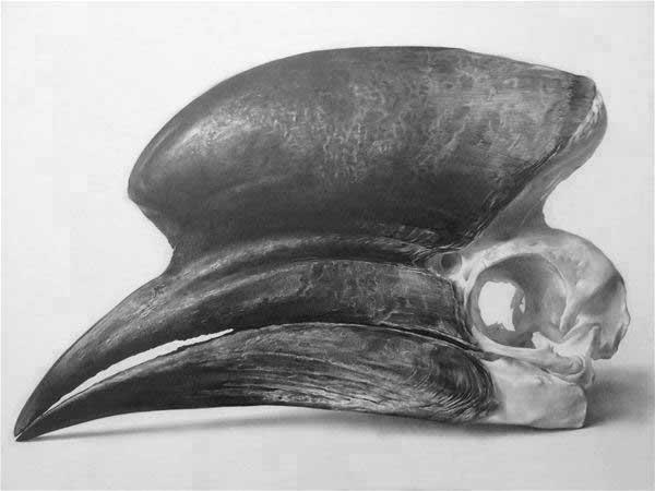 Hornbill, 2014