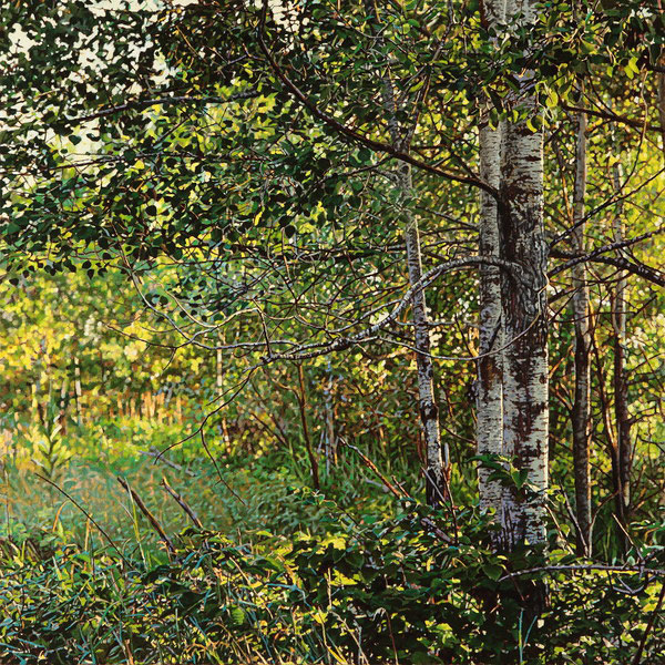 Thicket no.40 Birches, 2014